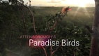 Attenborough's Paradise Birds (2015)
